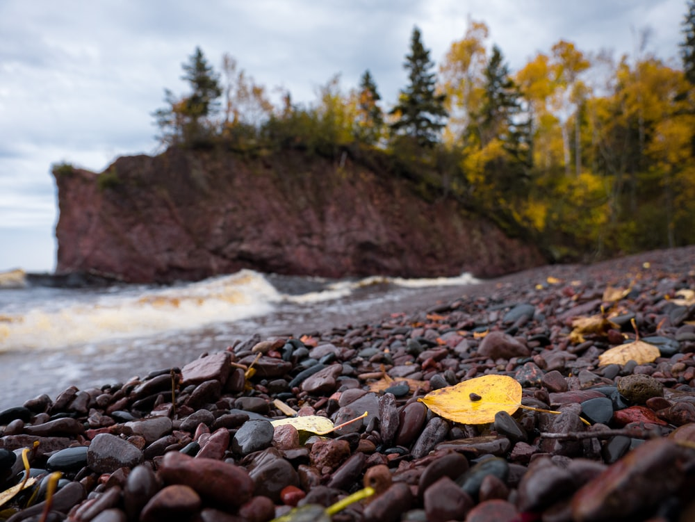 brown and black rocky beach