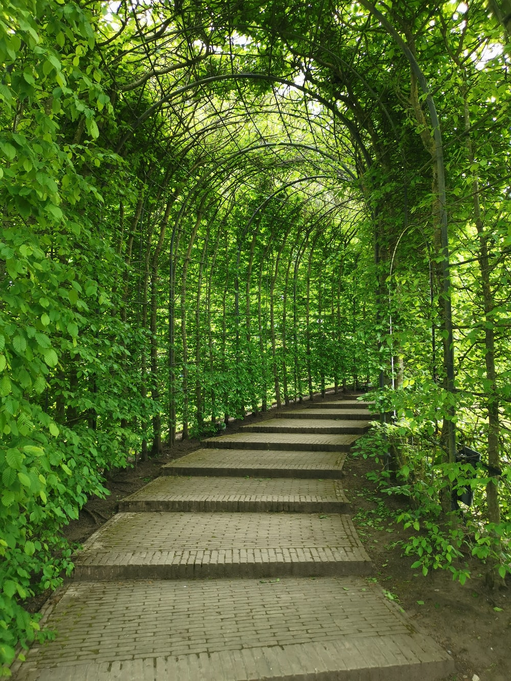 green vine plants on arc covered pathways