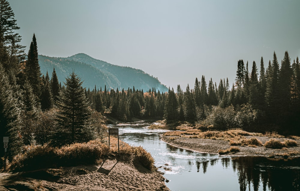 river flows near pine trees at daytime