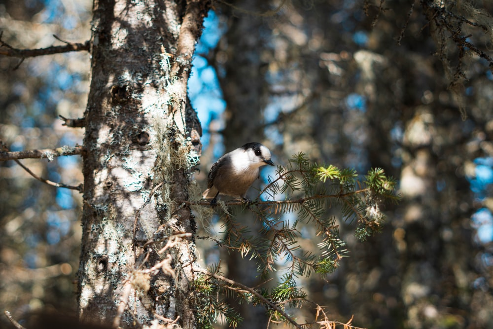 close-up photography of bird on tree