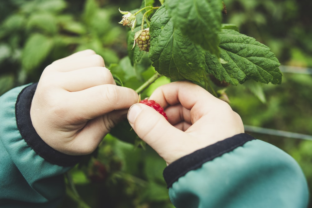 person holds green leafed plant