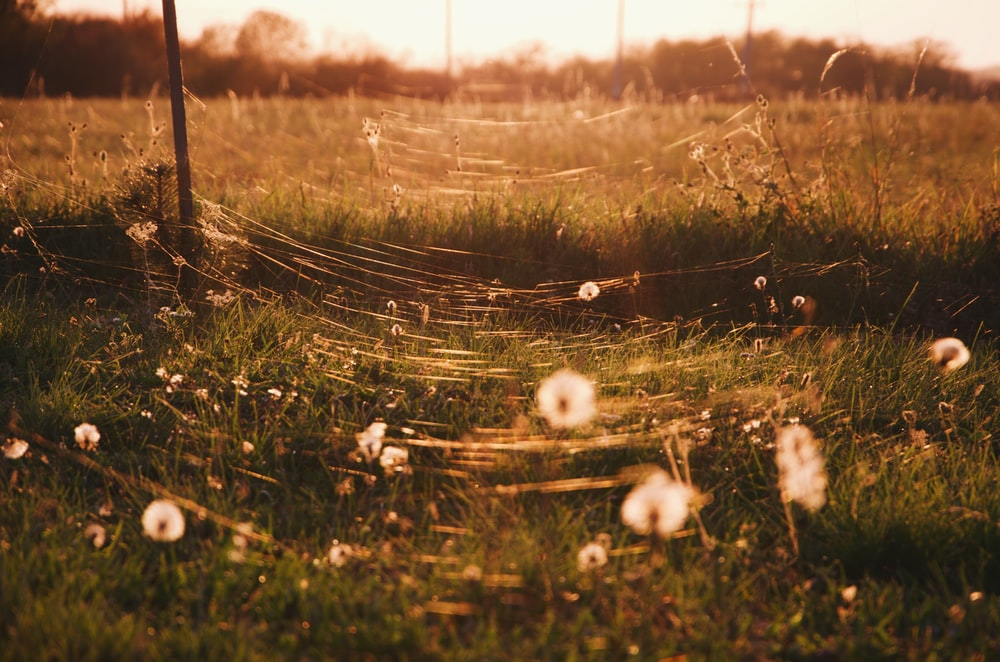 selective focus photo of cobweb and flowers