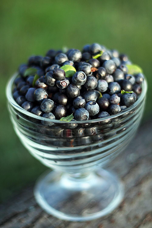 round black fruits close-up photography