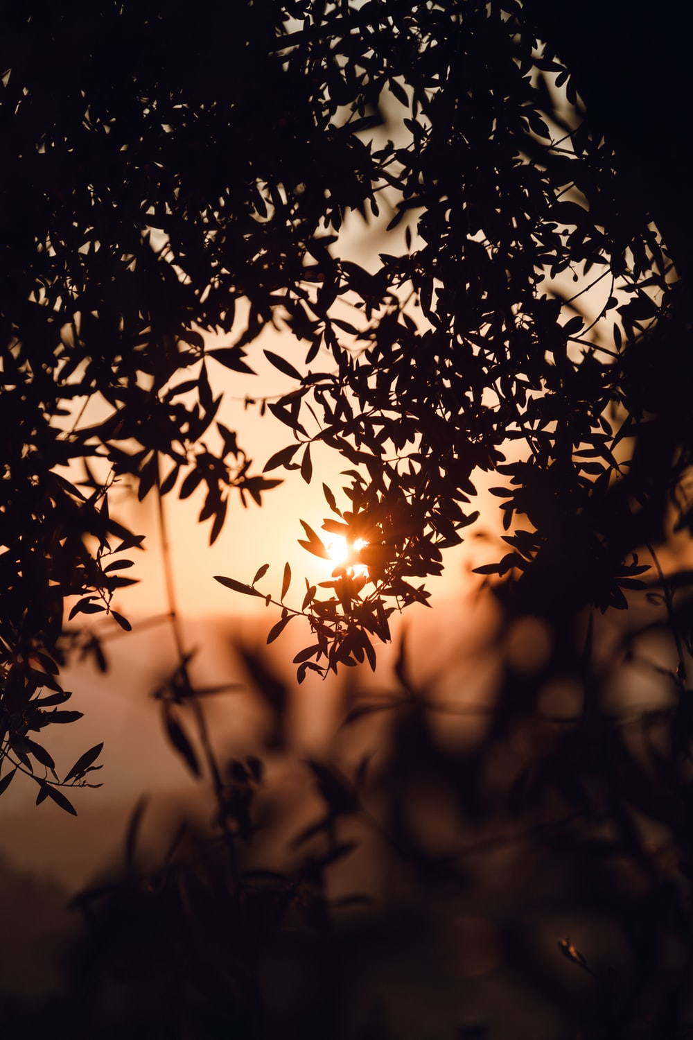 silhouette of leaf sunset