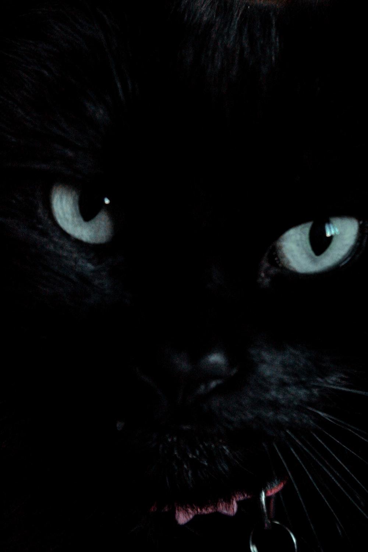 black and white short fur cat