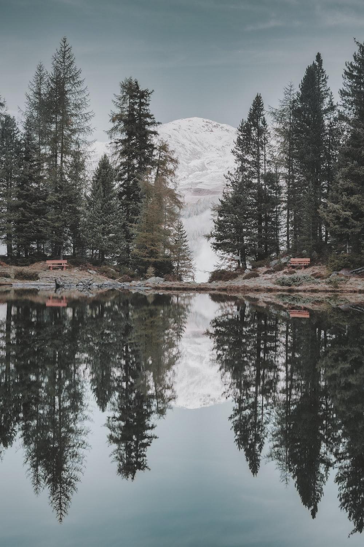 body of water beside trees