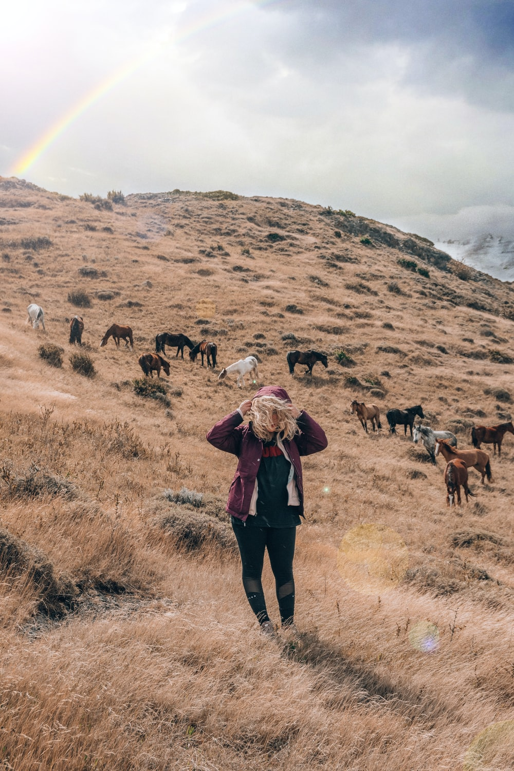 woman on hill beside horses