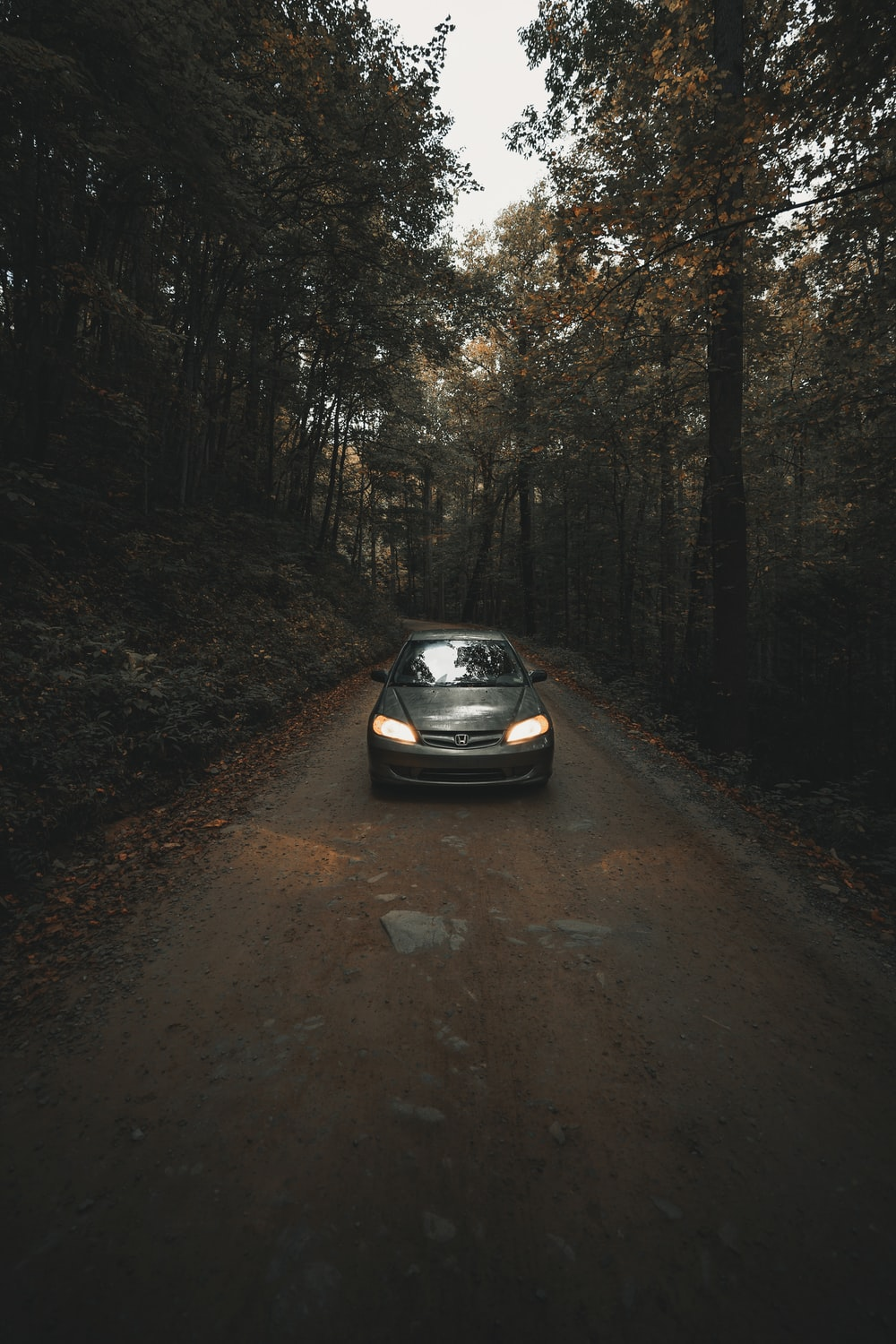 car on dirt road between trees
