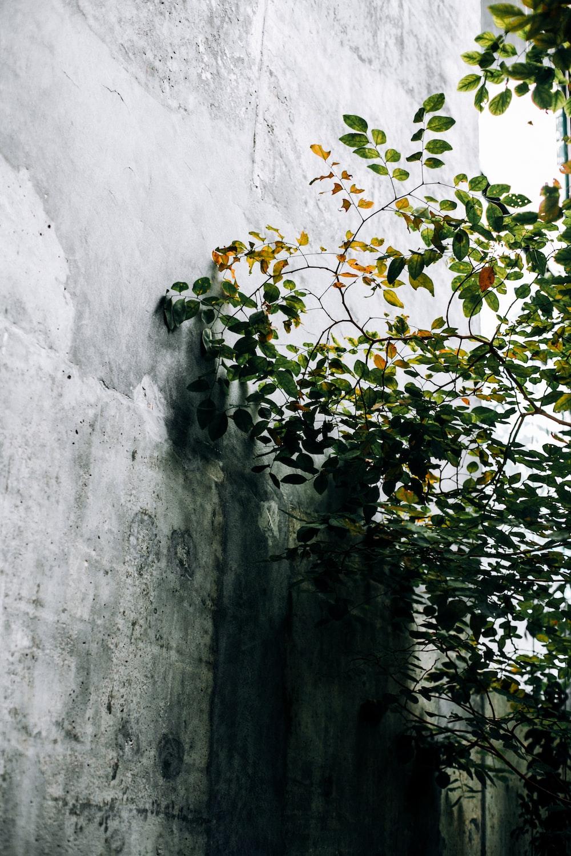 green-leafed tree near wall