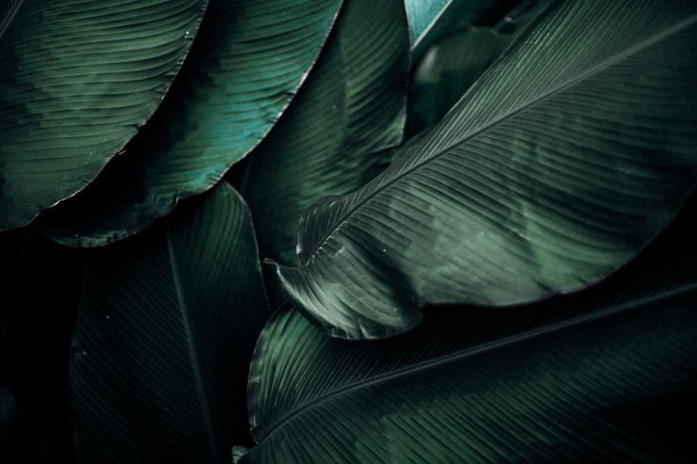 green leaves macro photography