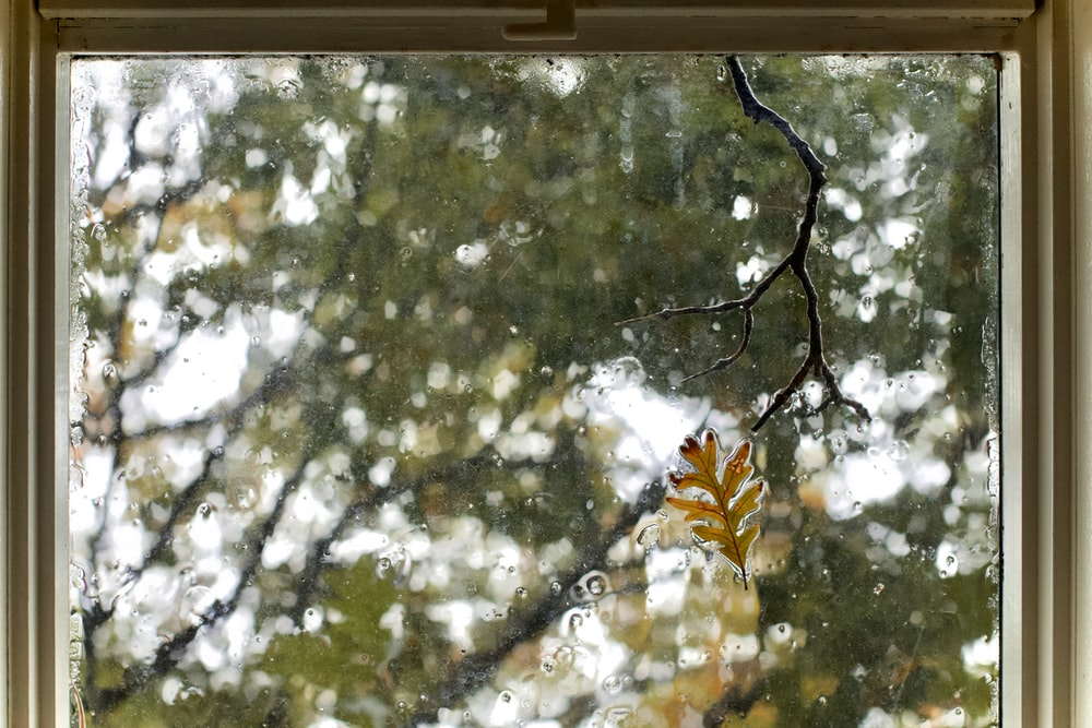 glass window with tree view during day