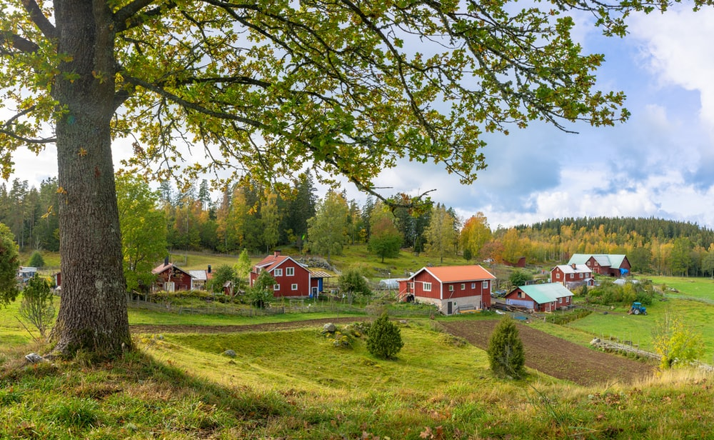 houses on grass field near forest