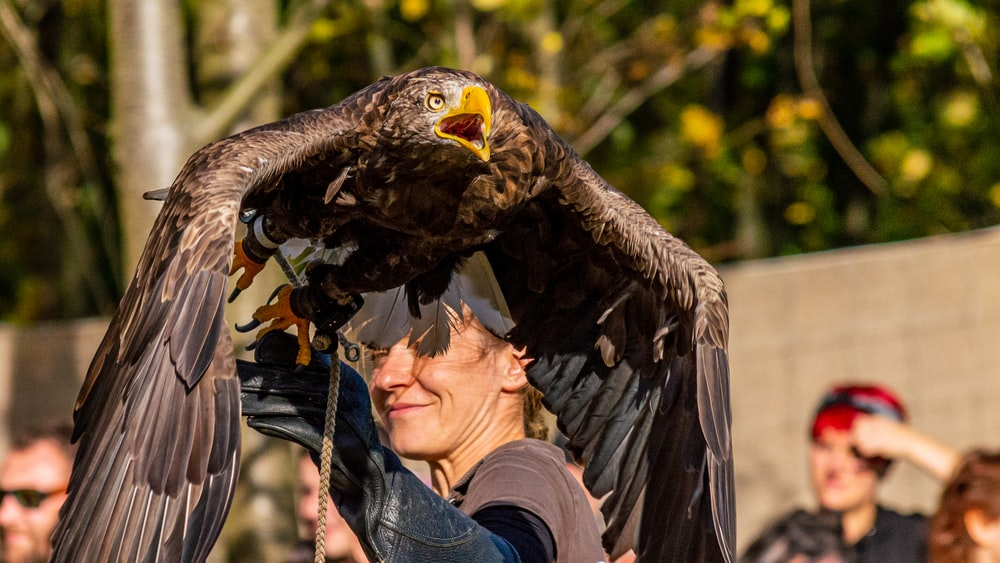 selective focus photography of person holding eagle taxidermy during daytime