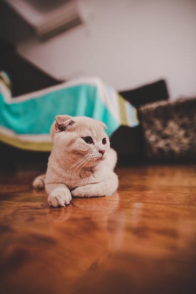 orange cat on floor
