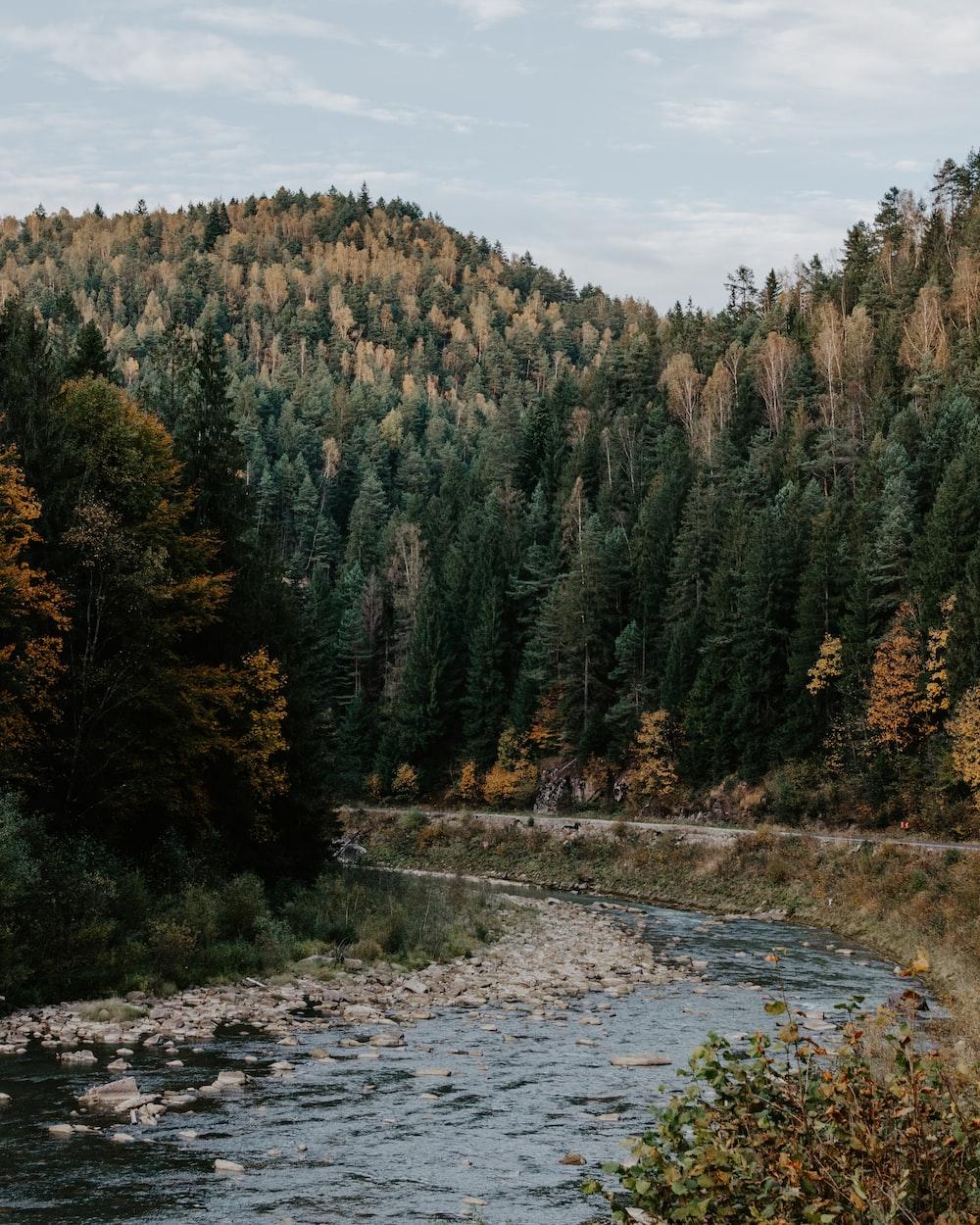 trees beside water stream