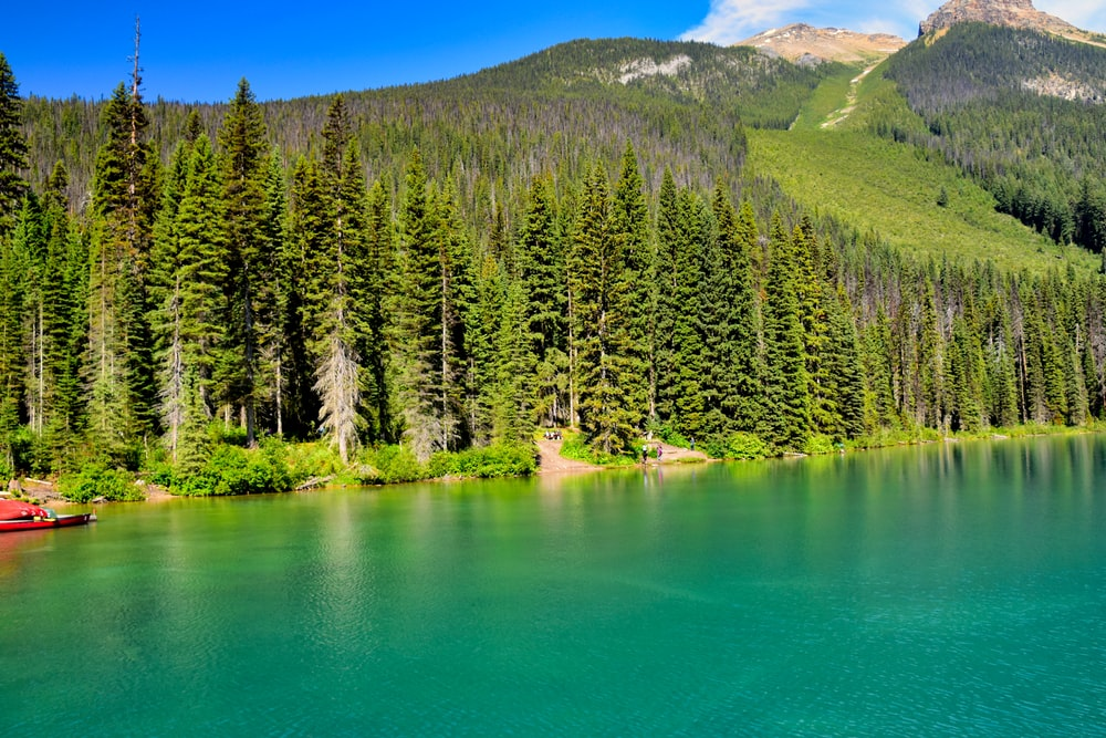green trees in the mountain and blue body of water