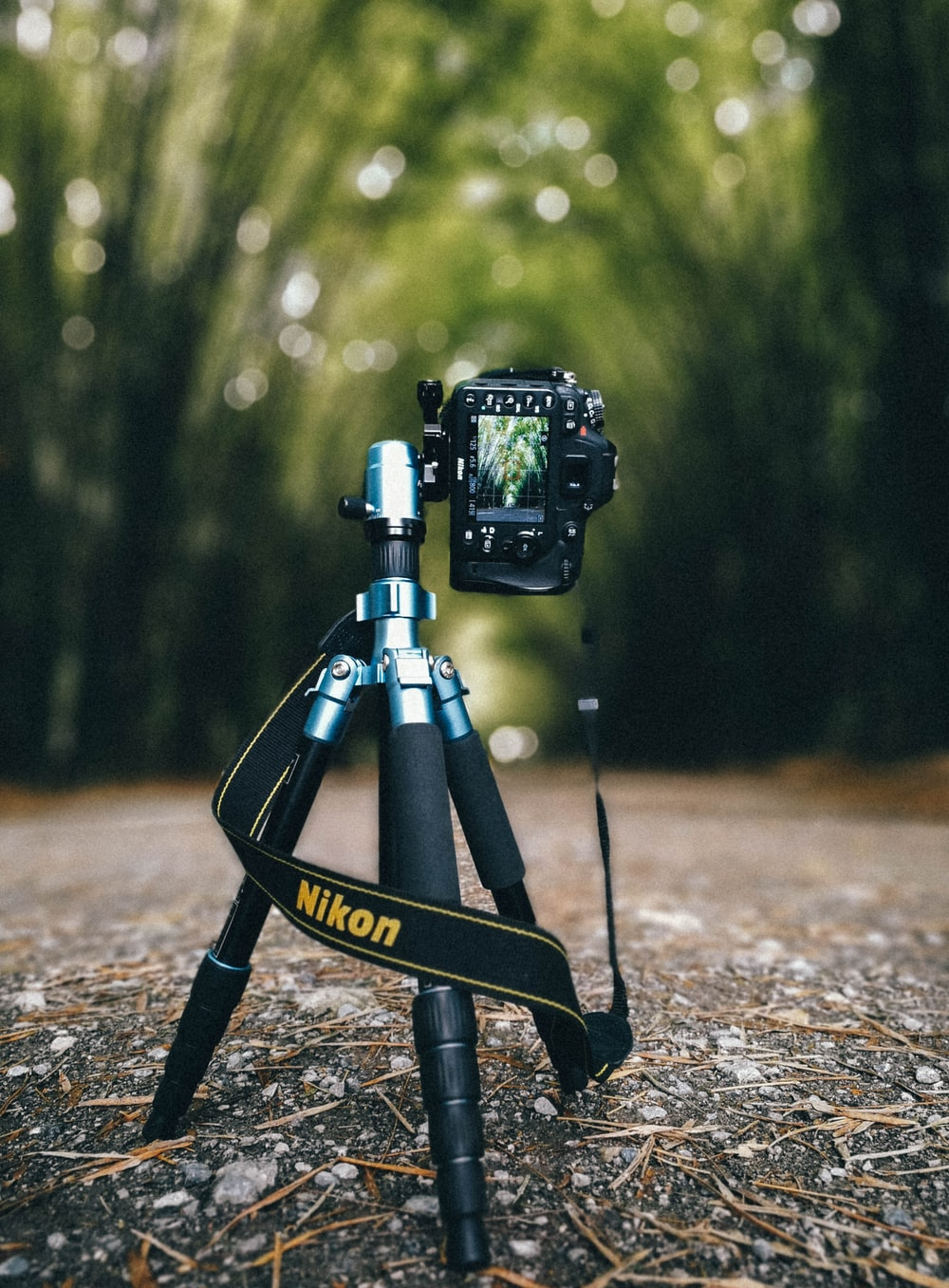camera on tripod in the middle of the road surrounded with trees during day