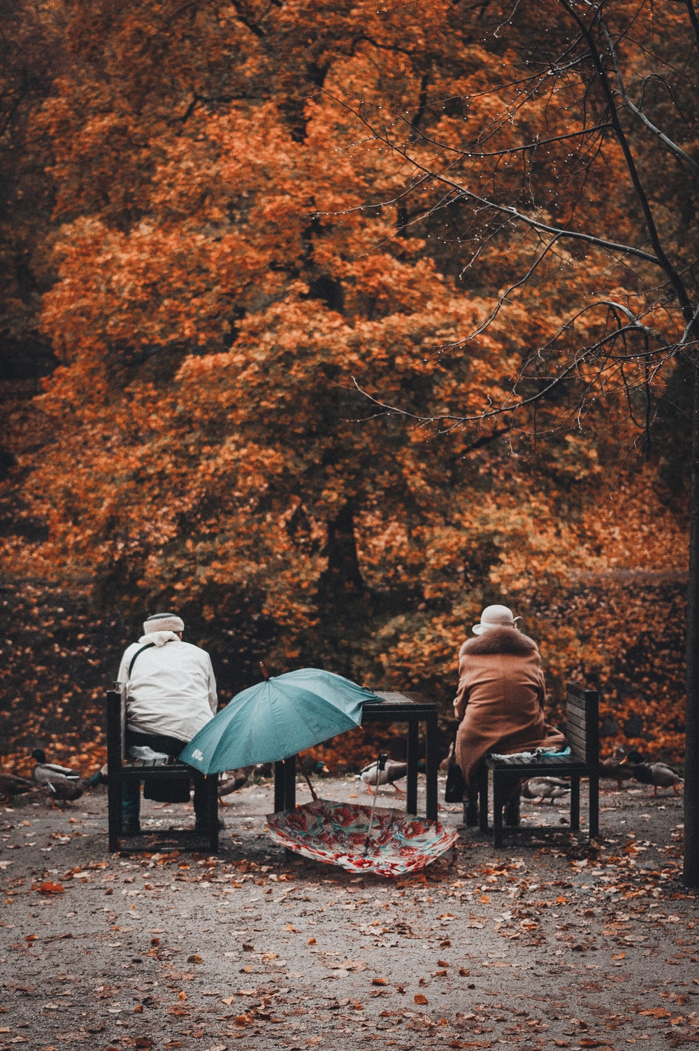 two person sitting on bench with two umbrellas