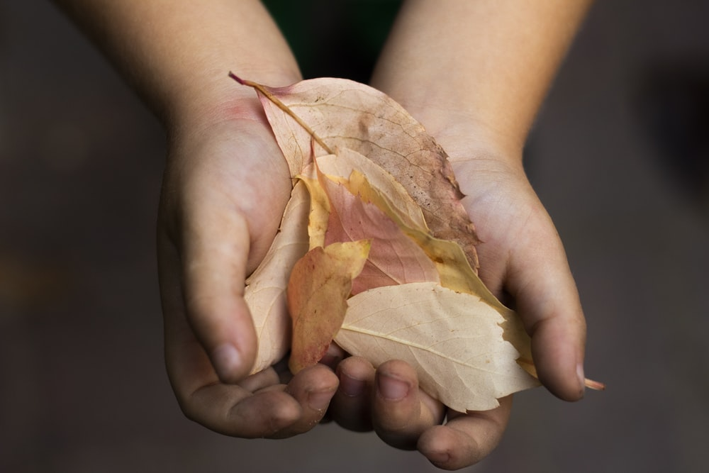 person holding brown leaf lot