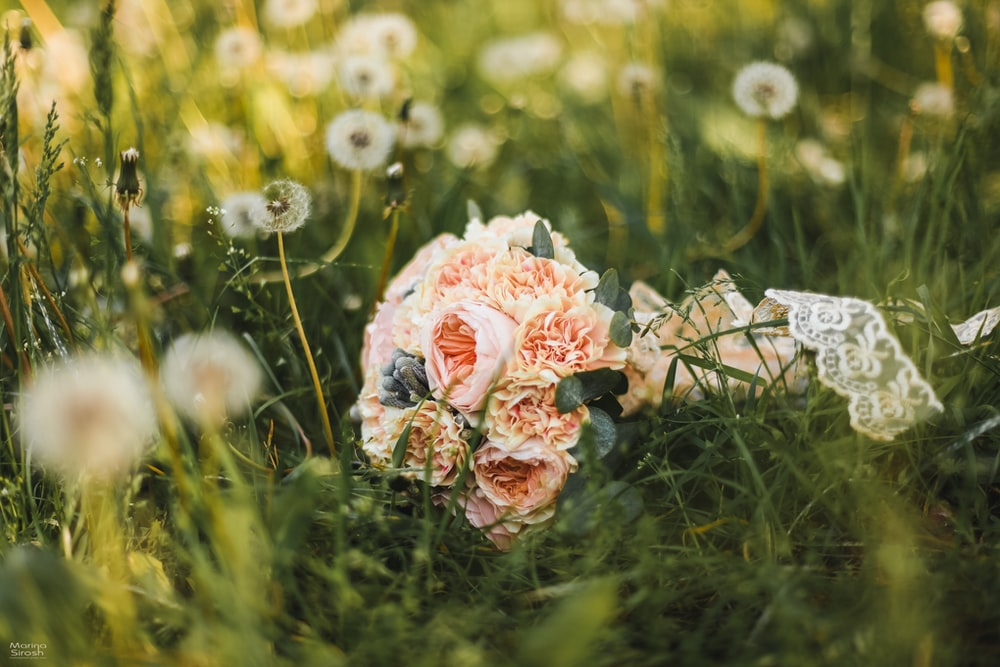 bouquet of pink-petaled flowers in grass