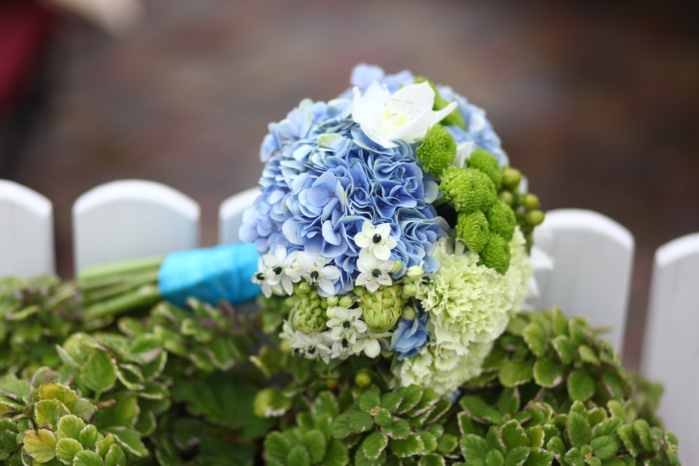 bouquet of blue and green-petaled flowers