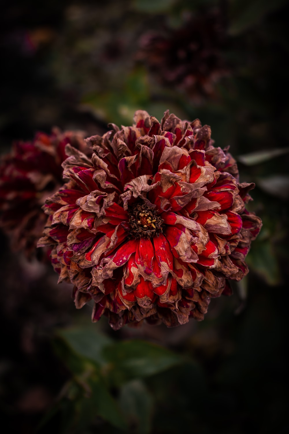 red and brown cluster flower during daytime