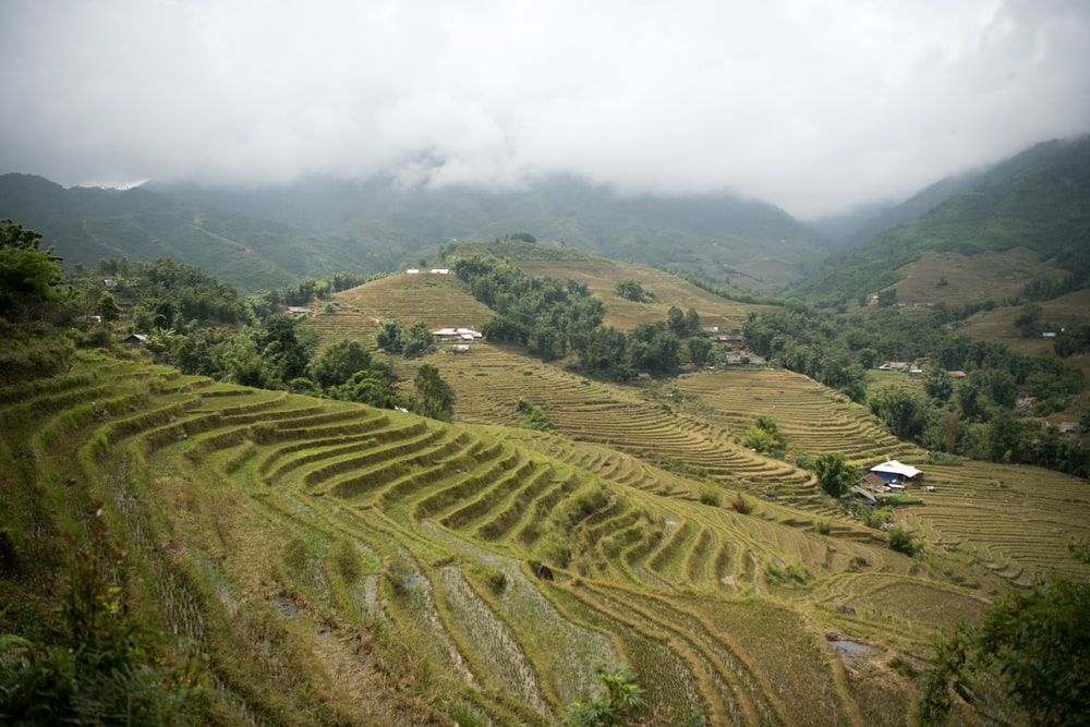 buildings on plant mountains