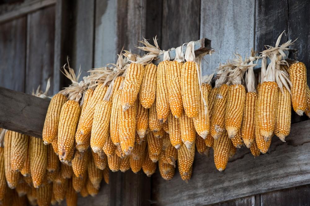 yellow corns hanged near wall