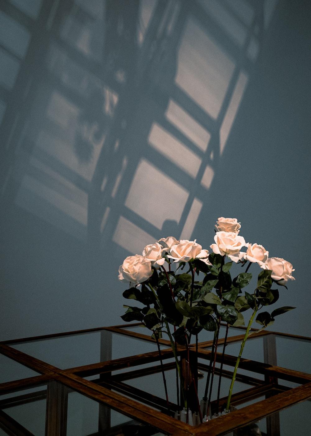 white rose flowers