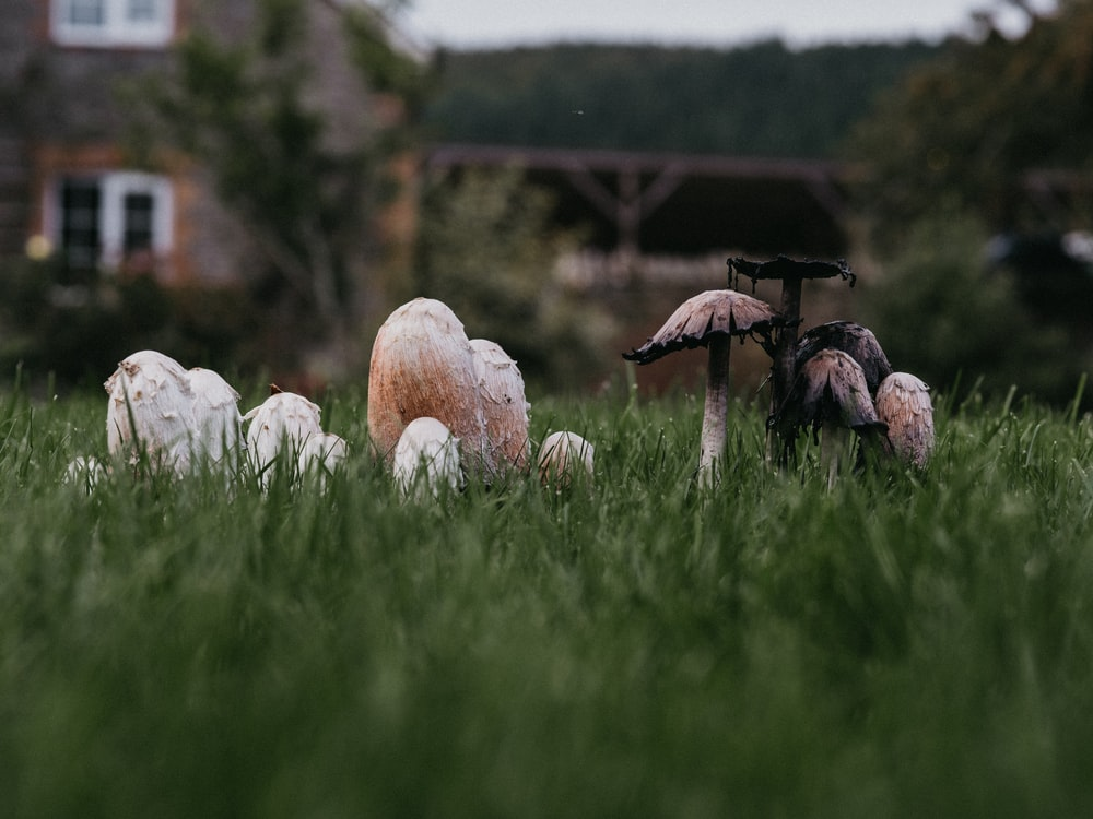 shallow focus photo of gray mushrooms