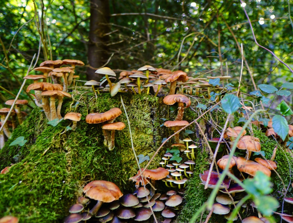 mushrooms in a tree stomp surrounded with moss