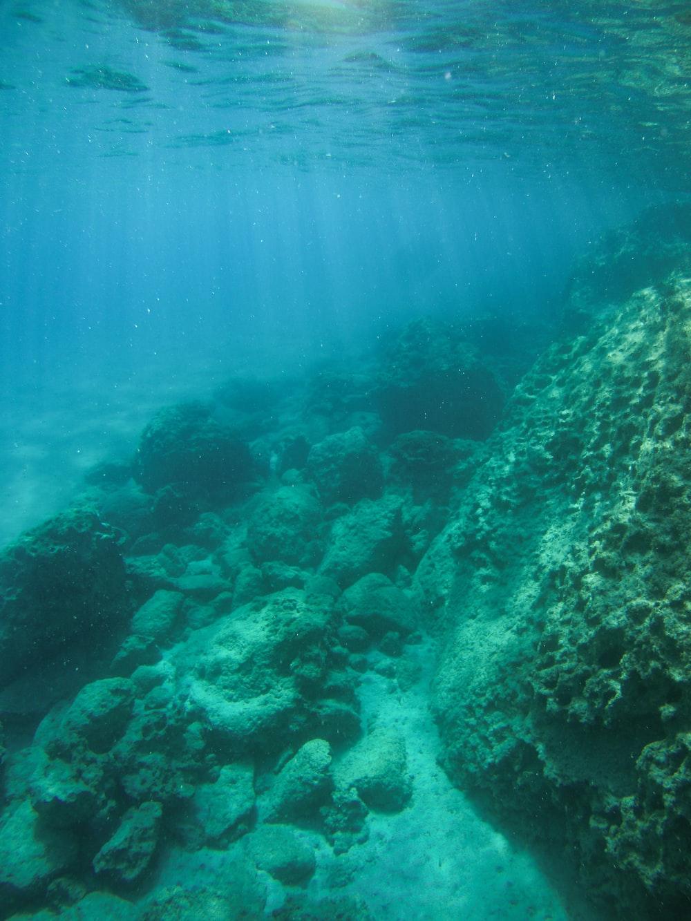 underwater photography of rocks