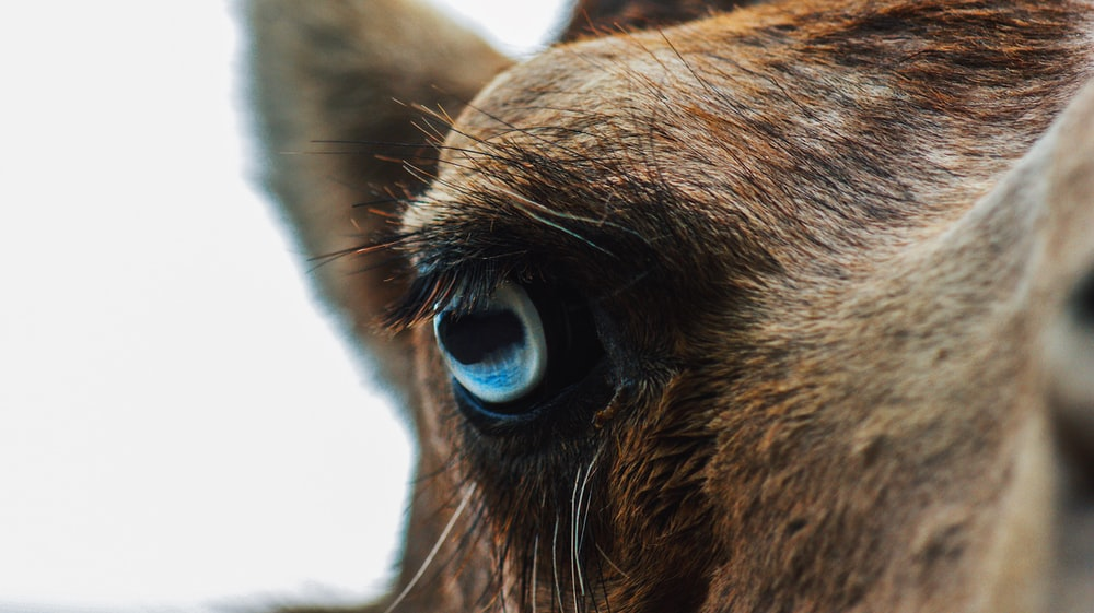 brown animal in close-up photo