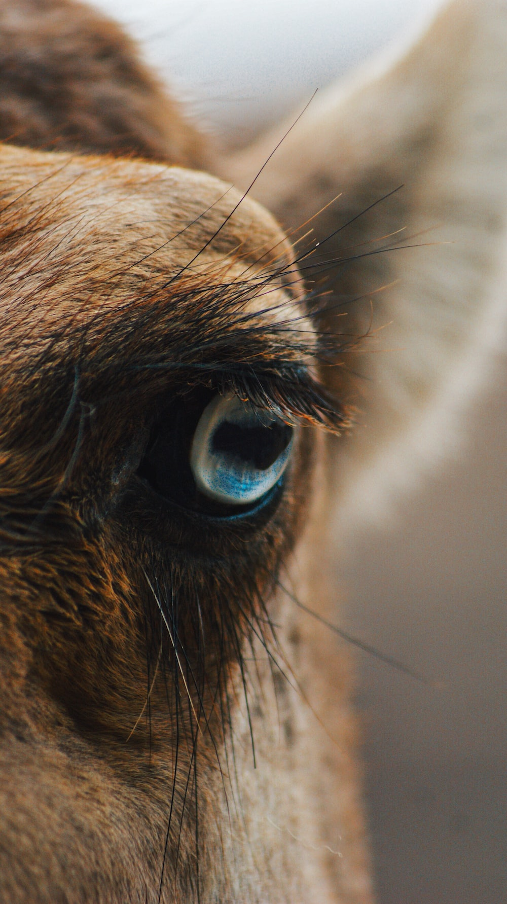 close up photography of brown animal