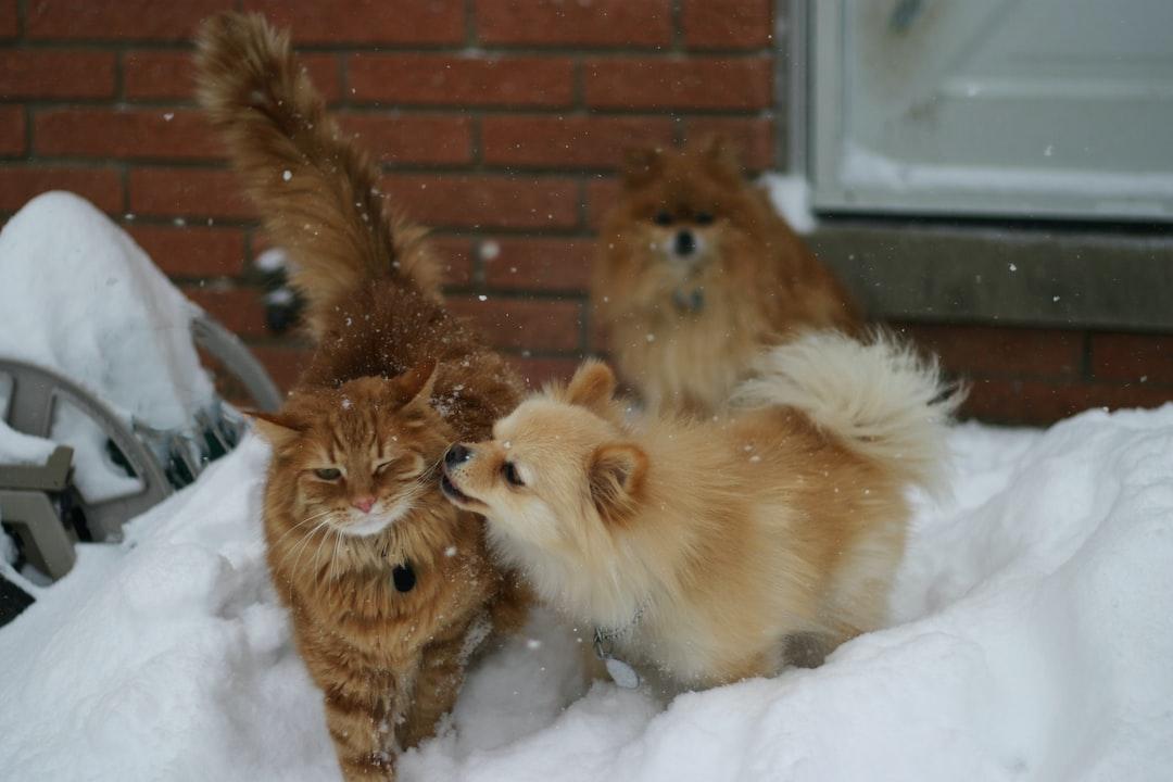 Dog licks cat in snow