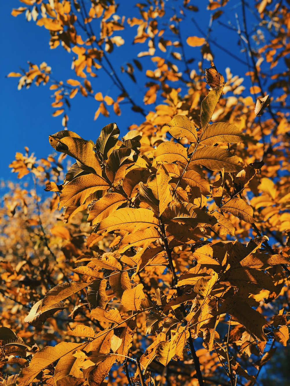 yellow and black leaf plant