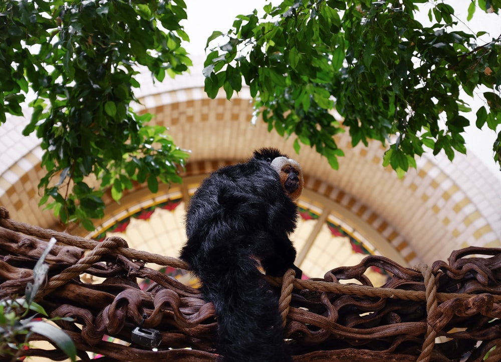 black and brown monkey plush toy