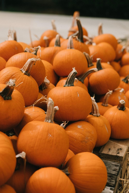 orange pumpkin lot