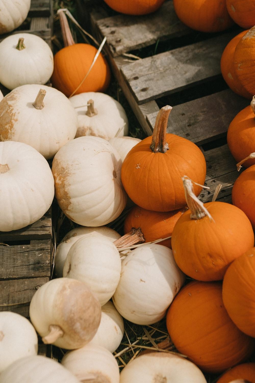 white and orange pumpkins on brown wooden pallet