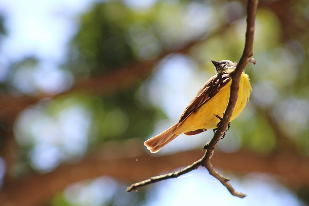 brown and yellow bird on branch
