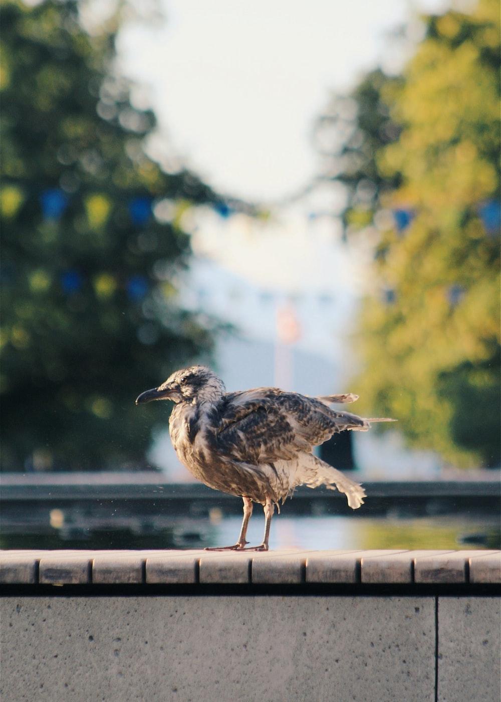 photo of brown bird