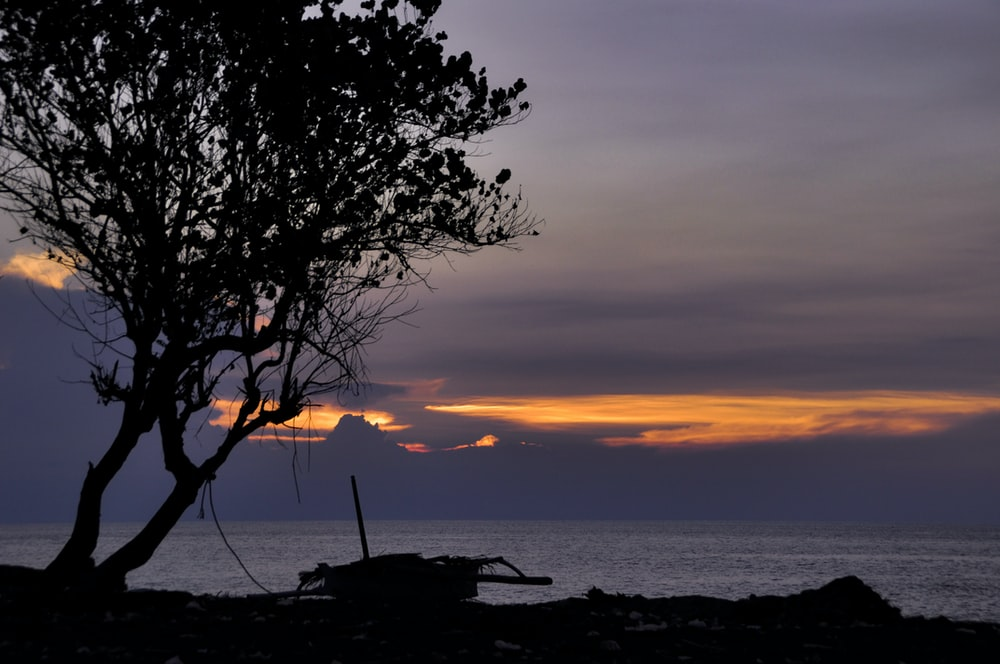 silhouette of tree and boat across body of water