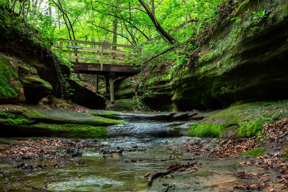 green trees beside wooden bridge