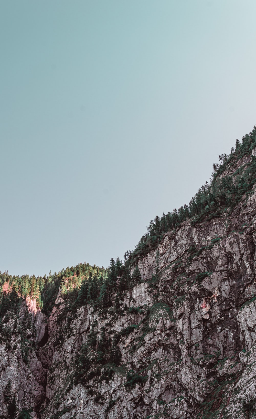 pine trees on rock formation