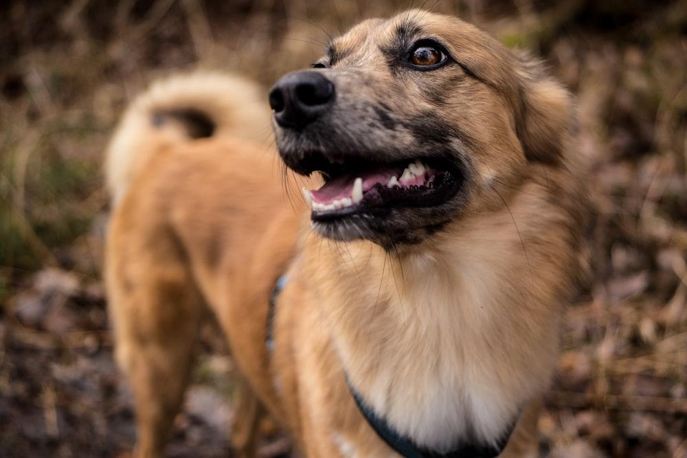 selective focus photo of tan dog