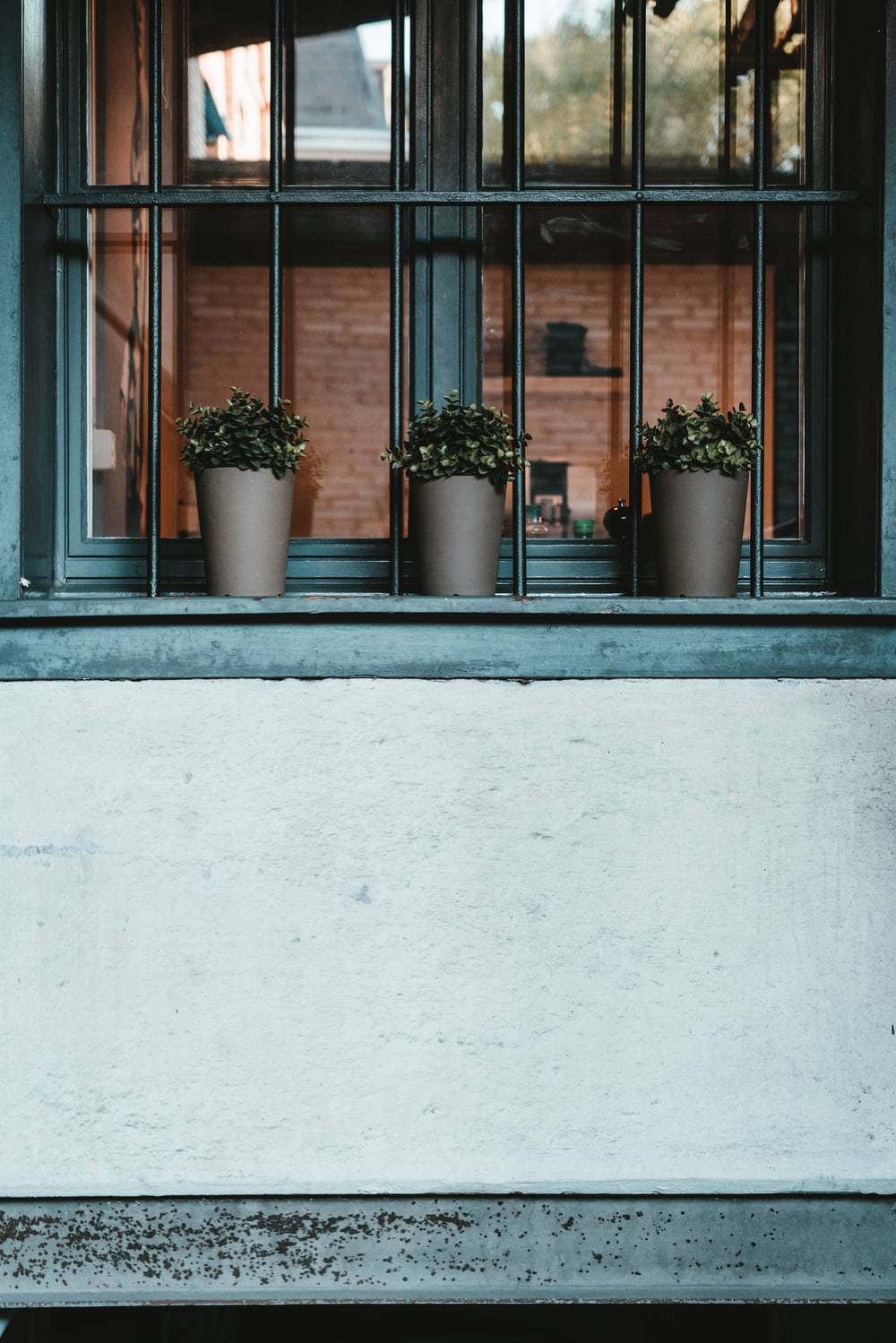 plants in pots on window sill with grille