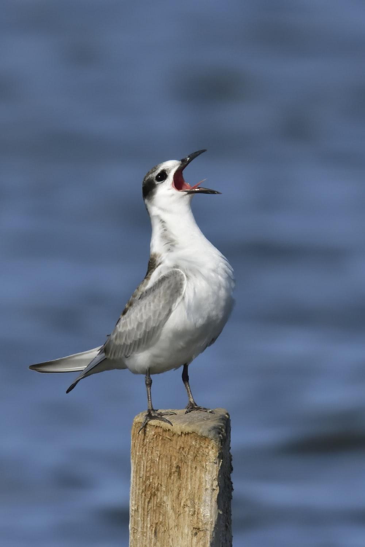 shallow focus photo of white and gray bird