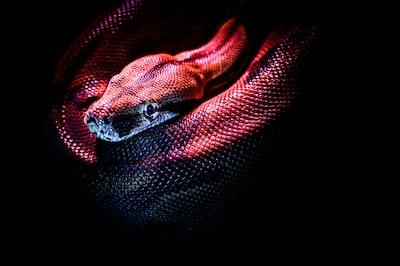 red snake snake teams background