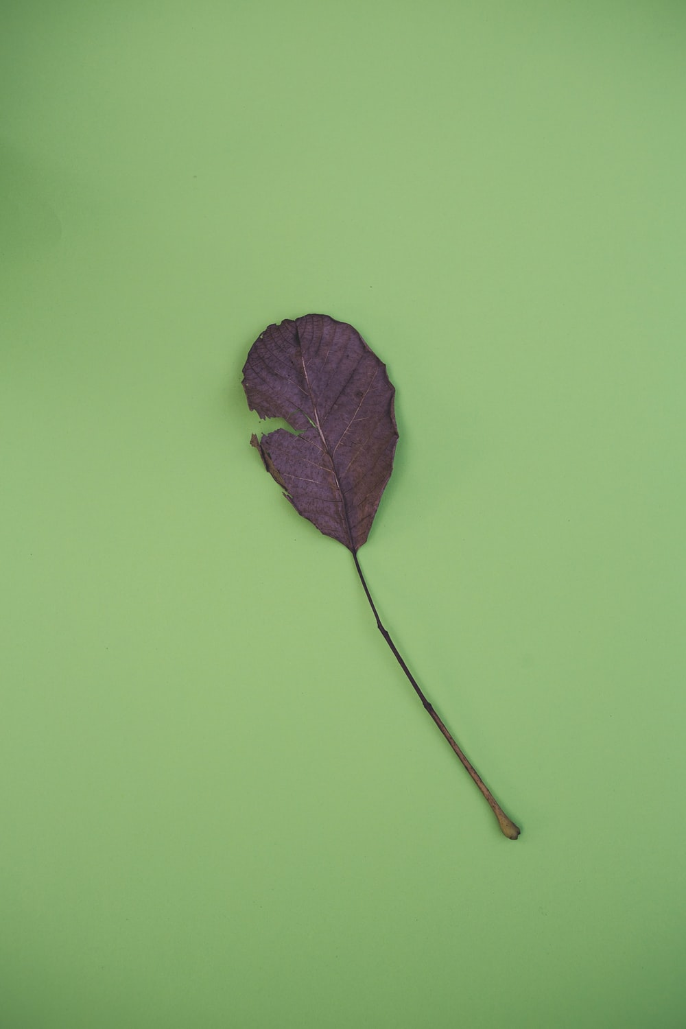 brown leaf on green surface