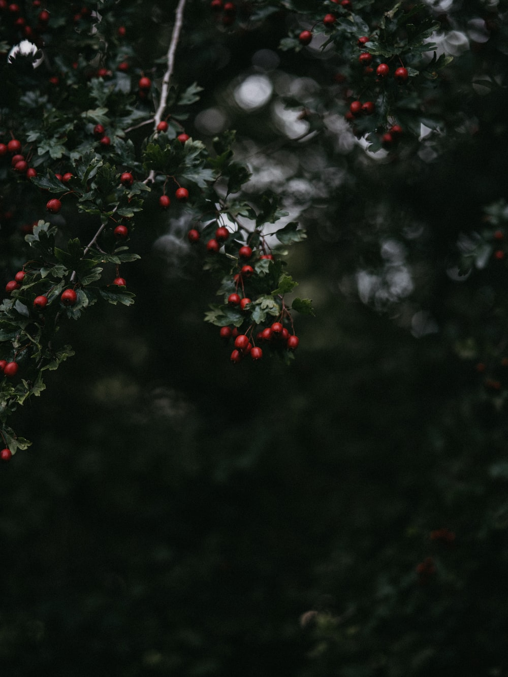 small red fruit lot